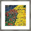Beautiful Flower Garden Bellagio Las Vegas Framed Print