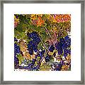 Beautiful Grape Harvest Framed Print