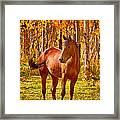 Beautiful Horse In The Autumn Aspen Colors Framed Print by James BO  Insogna