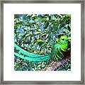 Beautiful Quetzal 3 Framed Print