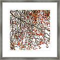 Beautiful Rowan 1 Framed Print