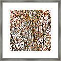 Beautiful Rowan 10 - Square Framed Print