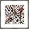 Beautiful Rowan 3 - Square Framed Print