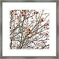 Beautiful Rowan 4 Framed Print