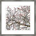 Beautiful Rowan 6 - Square Framed Print