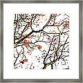 Beautiful Rowan 7 Framed Print