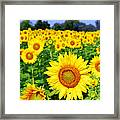 Beautiful Sunflowers Art Framed Print by Boon Mee