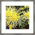 Beautiful Yellow Flower Framed Print