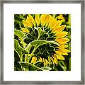 Beauty From The Back Framed Print