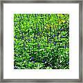 Beauty In The Meadow Framed Print