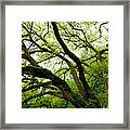Beauty In Time Framed Print