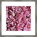 Beauty Of Pink Framed Print