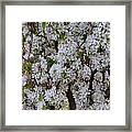 Beauty Of Spring Framed Print by Yvette Pichette