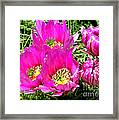 Beaver Tail Cactus Painting Framed Print