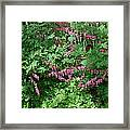 Bed Of Bleeding Hearts Framed Print