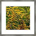 Bee And Goldenrod Framed Print