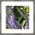 Bee Lavendar Framed Print