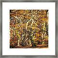 Beech Tree Group In Autumn Light Framed Print