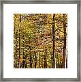 Beeches Framed Print