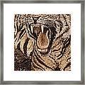 Bengal Tiger Framed Print by Vera White