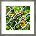 Berries And The City - Featured 3 Framed Print