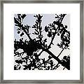 Berry Bush Framed Print