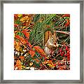 Berry Loving Squirrel Framed Print