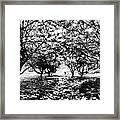 Between Trees II Framed Print