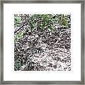 Bewick's Wren On The Canyon Wall Framed Print