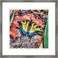 Beyond Chrysalis-tiger Swallowtail Framed Print