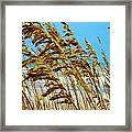 Beyond The Sea Oats Lies Eternity Framed Print by Lorraine Heath