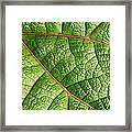 Big Green Leaf 5d22460 Framed Print
