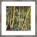 Big Island Bamboo Framed Print