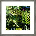Big Island Of Hawaii Ferns 2 Framed Print by Colleen Cannon