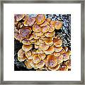 Big Mushrooms Family Framed Print