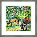 Big Red And Buck Framed Print