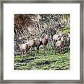 Bighorn Row Framed Print