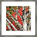 Birch Eclipsing Maple Framed Print