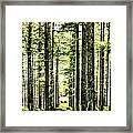 Birch Forest Fractal Framed Print
