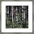 Birch Illusion Framed Print