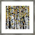 Birch Study Fall Framed Print