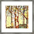 Birch Trees Framed Print by Diane Ferron