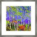 Birchtrees 56412 Framed Print