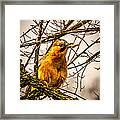 Bird Holding Food In Mouth Framed Print