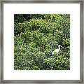 Bird In Bush Framed Print