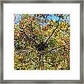 Bird Nest In A Tree Framed Print