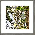Bird On A Vine In Jungle Forest In Chitwan Np-nepal  Framed Print