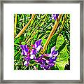 Bird Vetch On Bow River Trail In Banff National Park-alberta  Framed Print