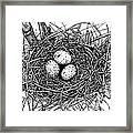Birds Nest Framed Print