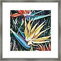 Birds Of Paradise  2   Sold Framed Print